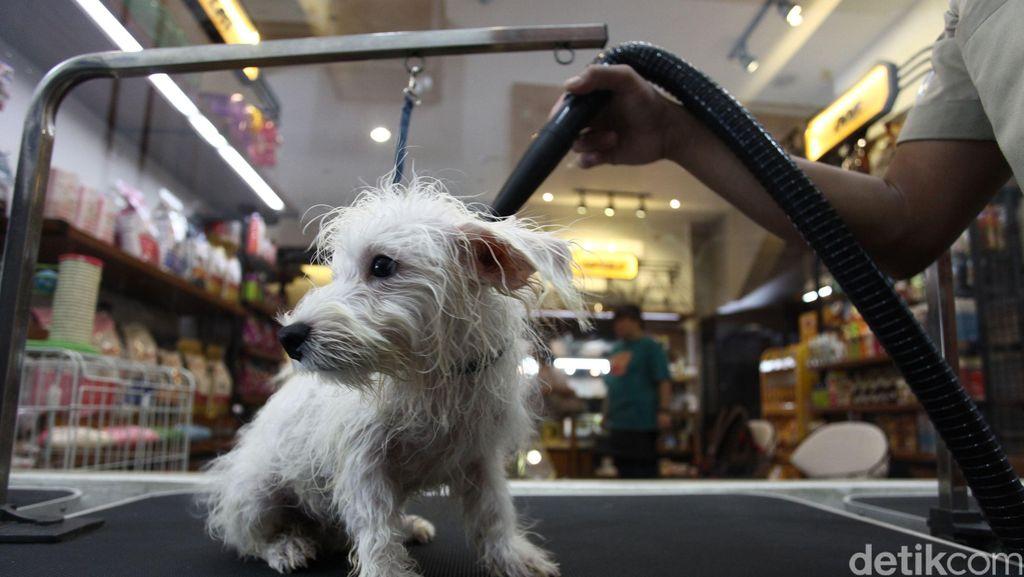 Daripada Ditinggal di Mobil, Lebih Baik Anjing Dititipkan