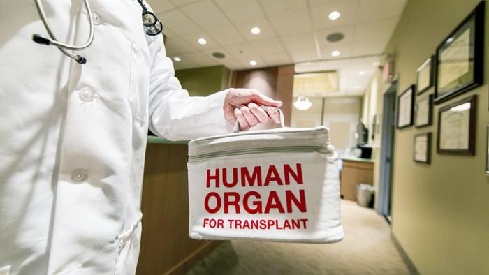 Ilustrasi donor organ. Foto: thinkstock