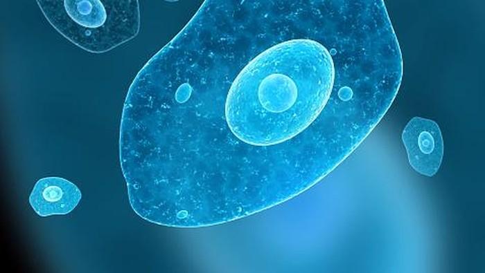 Amoeba merupakan makhluk mikroskopis.
