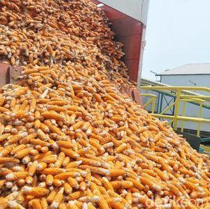 70.000 Ton Jagung Impor Sudah Masuk RI Awal Desember