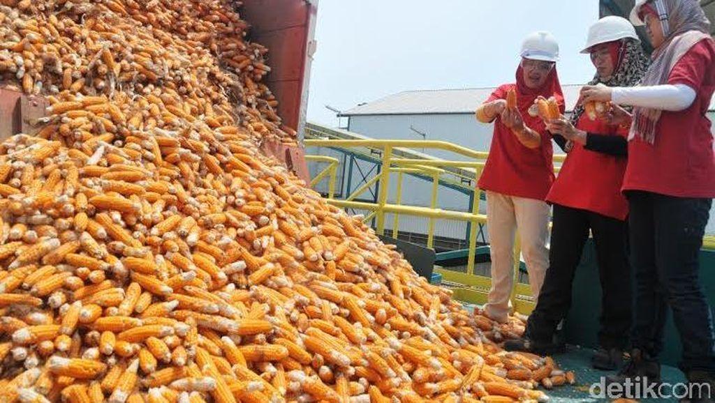 Kementan Sebut Impor 731 Ribu Ton Jagung untuk Industri