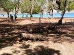 DPRD Sambut Baik Rencana Gubernur NTT Tutup Pulau Komodo