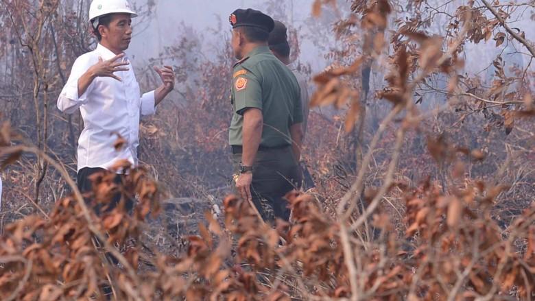 Saat Jokowi Masuki Lahan Kebakaran Hutan Tanpa Masker