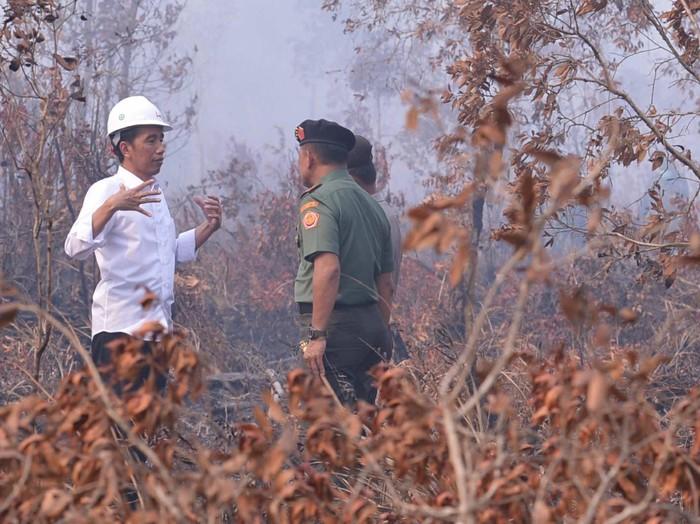 Jokowi meninjau kebakaran hutan (dok. Istana)