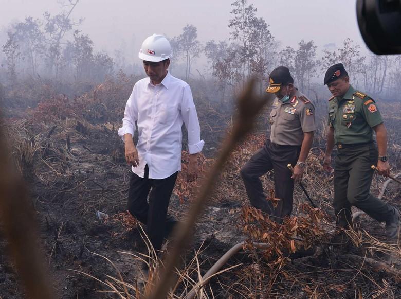 MA Vonis Jokowi Melawan Hukum di Kasus Kebakaran Hutan!