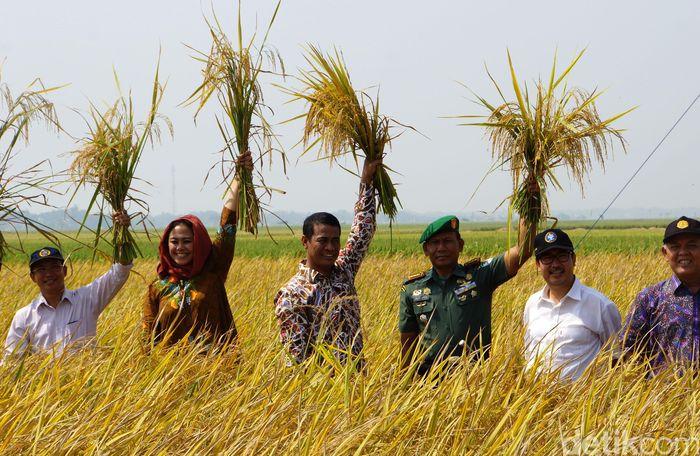 Mentan Panen Padi di Karawang/Foto: Istimewa/dok Kementan