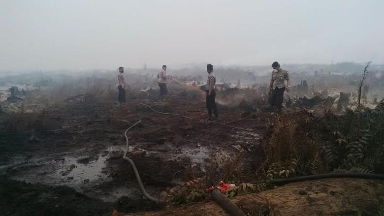 Ini 3 Perusahaan Pembakar Hutan yang Izinnya Dicabut Kementerian LHK