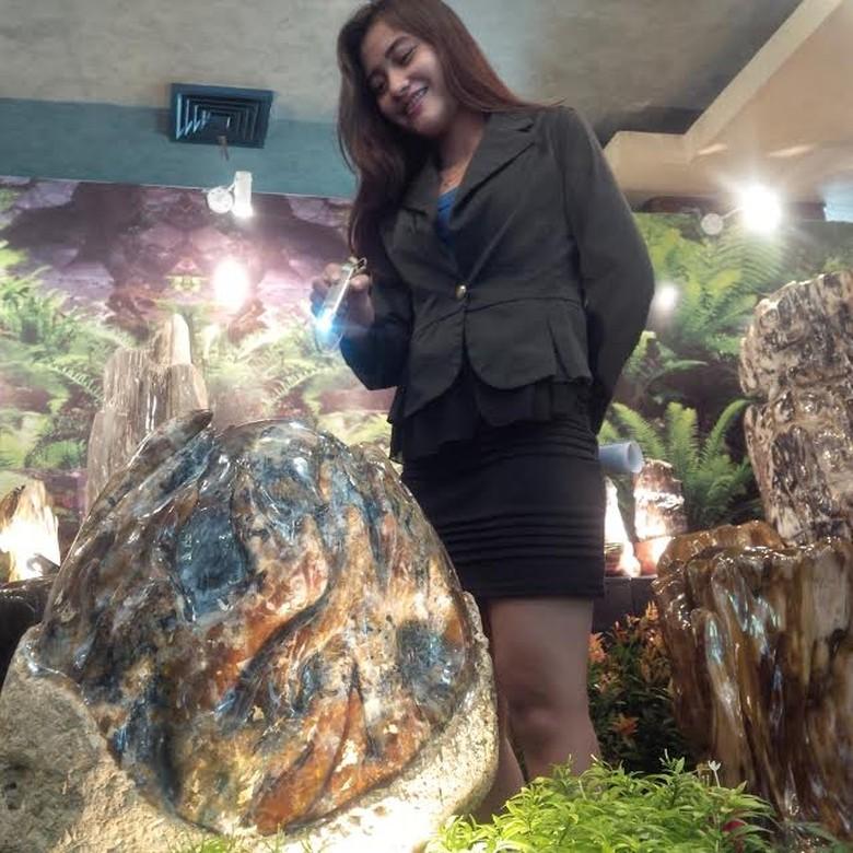 Batu Fosil Langka Asal NTT Berusia Ratusan Juta Tahun Dipamerkan di Medan