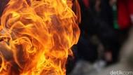 Ribut soal Lembu, Suami di Sergai Dibakar Istri Muda yang Mabuk Tuak