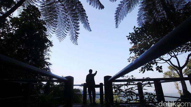Ribuan jenis pepohonan berusia puluhan bahkan ratusan tahun serta beragam habitat spesies hewan dapat dijumpai di kawasan Taman Nasional Gunung Gede Pangrango, Bodogol, Bogor, Jawa Barat, Selasa (24/11/2015). Salah satu hewan endemik Pulau Jawa yang dilindungi dan hampir puna Owa Jawa pun di konservasi di kawasan ini. Para pelajar dan mahasiswa yang mempelajari keanekaragaman hayati baik hewan ataupun tumbuhan juga bisa mempelajarinya dan melihat langsung di alam liar TN Gn Gede Pangrango Bodogol ini. Rachman Haryanto/detikcom.