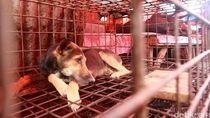 Ini Bahaya Konsumsi Daging Anjing