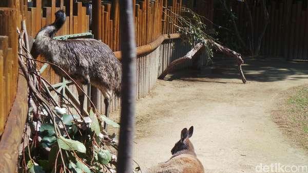 Belajar <i>Move On</i> dari Kanguru dan Emu di Kebun Binatang Taronga Sydney