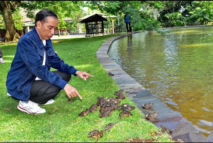 Foto ilustrasi: Jokowi berada di dekat kolam. (Agus Suparto/detikcom)
