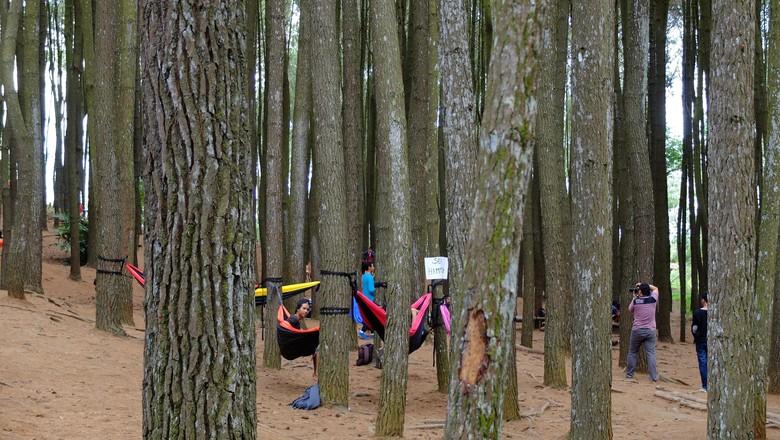 Seputar Hutan Pinus Mangunan, Wisata Instagramable di Yogyakarta/Foto: Sri Anindiati Nursastri/detikTravel