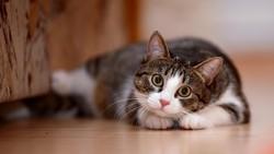 Bukti Kucing Punya 9 Nyawa, Lompat dari Lantai 5 Tidak Mati