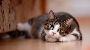 Diduga Gara-gara Kucingnya, Pria Ini Terkena Penyakit Langka