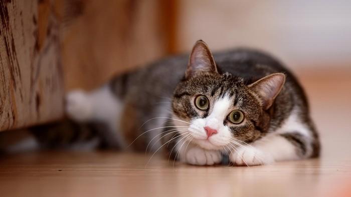 Kamu pencinta kucing atau pencinta anjing? Foto: Thinkstock