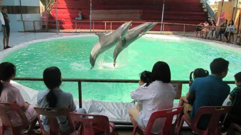 Sirkus keliling lumba-lumba berbahaya tapi marak di Indonesia