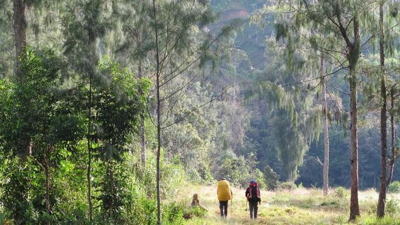 Trekking ke dalam hutan di Papua (Afif Farhan/detikTravel)