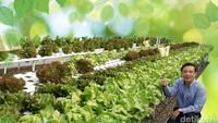 Menengok Kisah Eks Bos Disc Tarra Tutup Bisnis hingga Jadi Petani Sayur