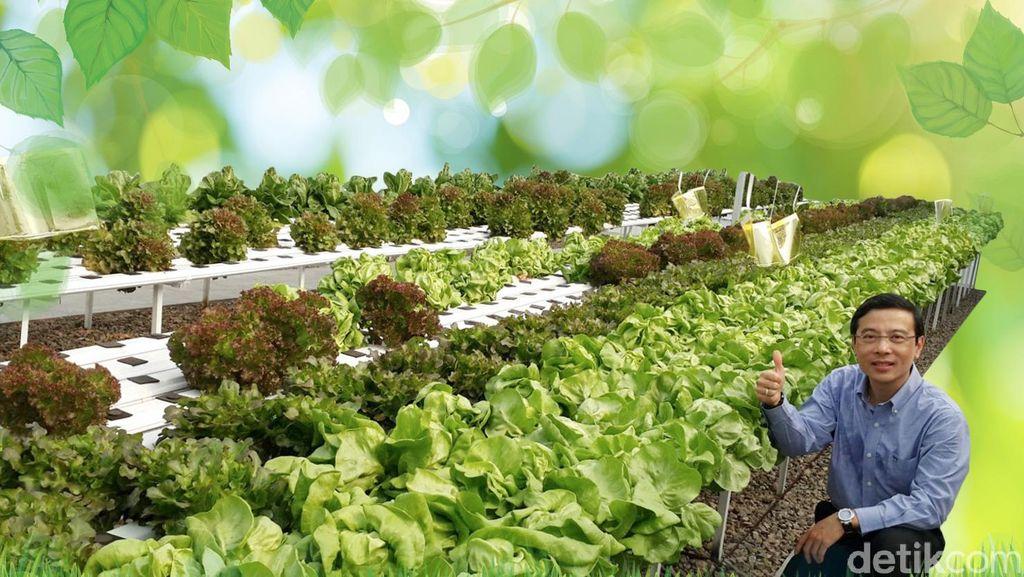 Menengok Kisah Eks Bos Disc Tarra Tutup Bisnis dan Kini Jadi Petani Sayur