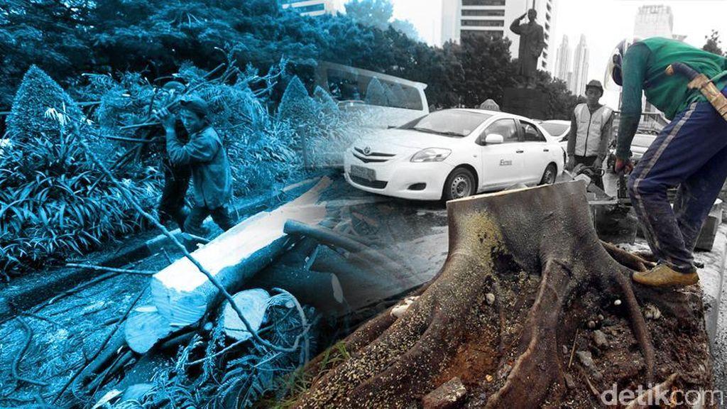 Pohon Tumbang di Pariaman Sumbar: 30 Mobil Rusak, 1 Orang Meninggal
