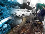 Hujan Lebat di Sragen, Puluhan Pohon Bertumbangan