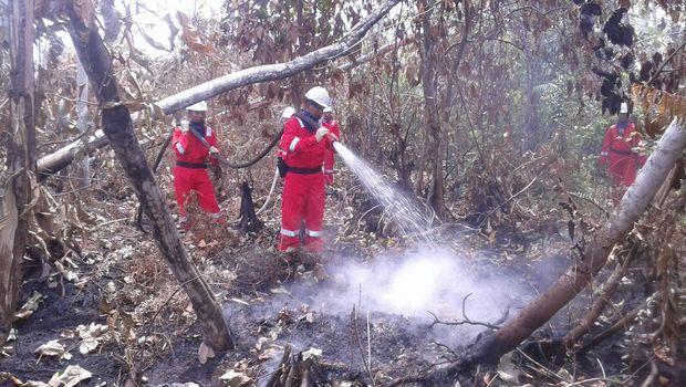 Penanganan kebakaran hutan dan lahan di Bengkalis tahun 2015.