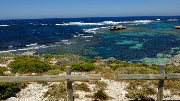 Quokka, hewan endemik Australia di Rottnest Island