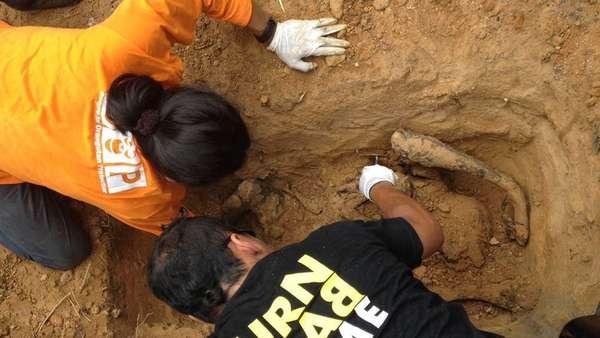 Masih Selidiki Kematian 3 Orangutan di Bontang, Polisi Periksa 11 Saksi