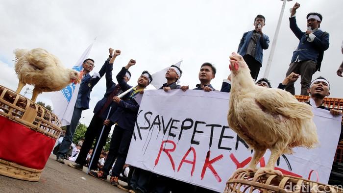 Peternak ayam potong berunjukrasa di depan Istana Merdeka, Jakarta, Selasa (1/3/2016). Mereka memintah pemerintah memperbaiki tata niaga unggas untuk menjaga stabilitas harga di tingkat peternak. Para peternak yang tergabung dalam Sekber Penyelamatan Peternak Rakyat dan Perunggasan Nasional meminta kenaikan harga jual ayam hidup di atas Biaya Pokok Produksi (BPP) yakni Rp18.500/ekor. Aksi yang diiikuti sekitar 300 peternak tersebut berlangsung damai dan tertib. (Ari Saputra/detikcom)