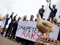 Pak Erick Thohir, Peternak Teriak Minta BUMN Serap Ayam biar Nggak Bangkrut