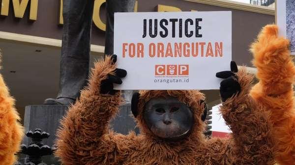 Polri Diminta Usut Matinya 3 Orangutan di Bontang