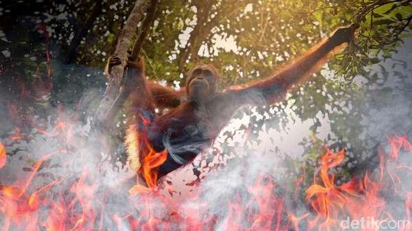 Tersangka Kasus Matinya 3 Orangutan di Bontang Terancam 5 Tahun Penjara