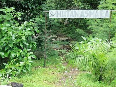 Hutan Asmara yang Penuh Misteri di Belitung
