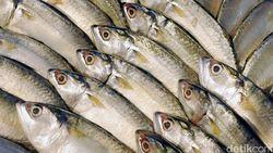 RI Bantah Larangan Produk Perikanan oleh China, Ini Klarifikasi Lengkapnya
