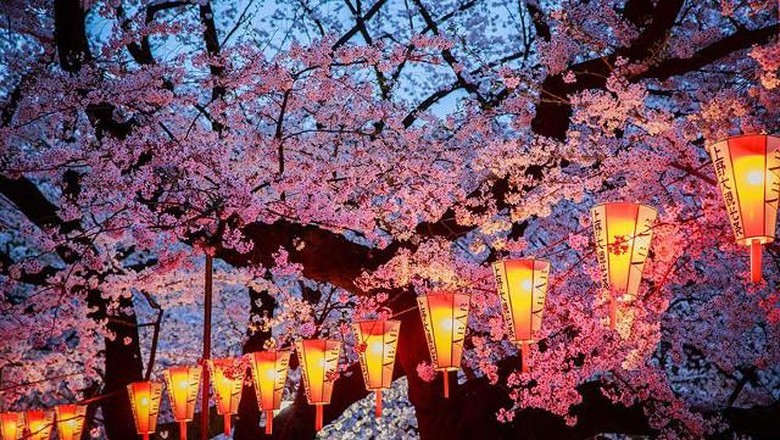 Deretan fotografi bunga sakura