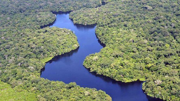 5 Rekomendasi Film Tentang Hutan di Amazon