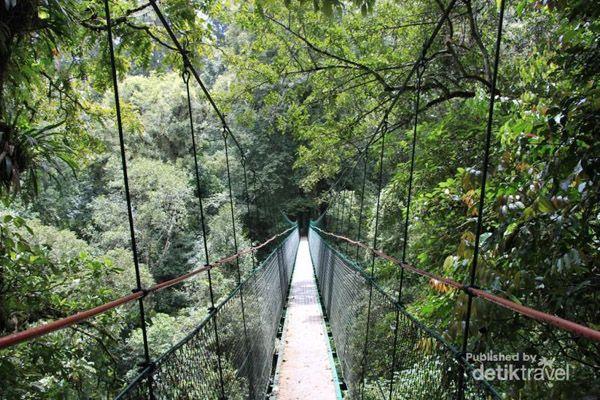 Jembatan di Taman Nasional Gunung Gede Pangrango