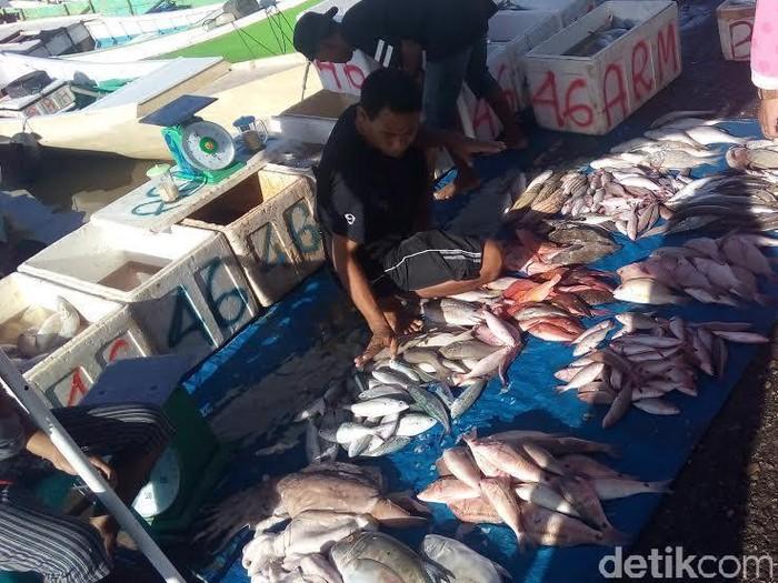 Ikan patin dari vietnam ditemukan mengandung tripolyphosphate berlebih. (Foto ilustrasi: Wisnu Prasetiyo/detikcom)