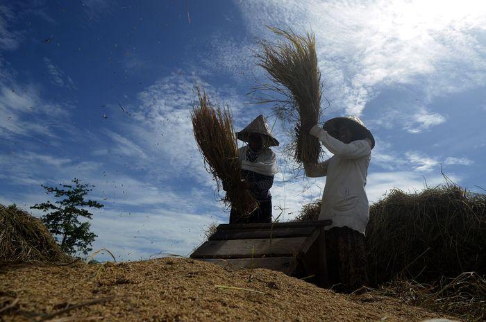 Foto: ANTARA FOTO/Sahrul Manda Tikupadang
