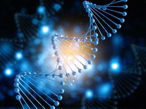Terungkap, Ada 17 Penanda Genetik yang Bisa Meramalkan Umur Panjang