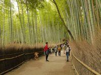Arashiyama, hutan bambu yang terkenal di Kyoto (Kurnia/detikTravel)