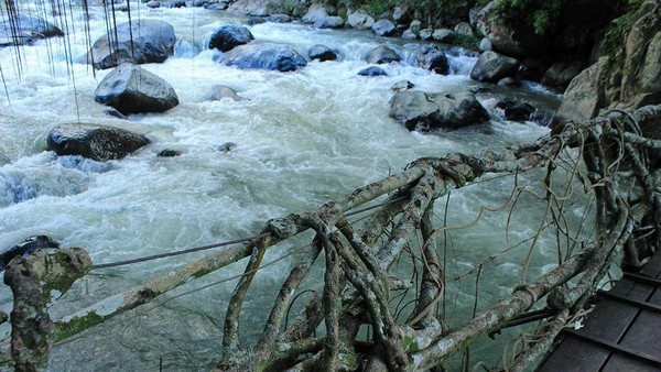 Dahulu jembatan ini dibuat dengan bahan bambu oleh warga untuk menghubungkan kedua kampung. Namun seiring dengan berjalannya waktu, perlahan akar pohon beringin menggeliyat dan mengeras di jembatan tersebut (Randy/detikTravel)