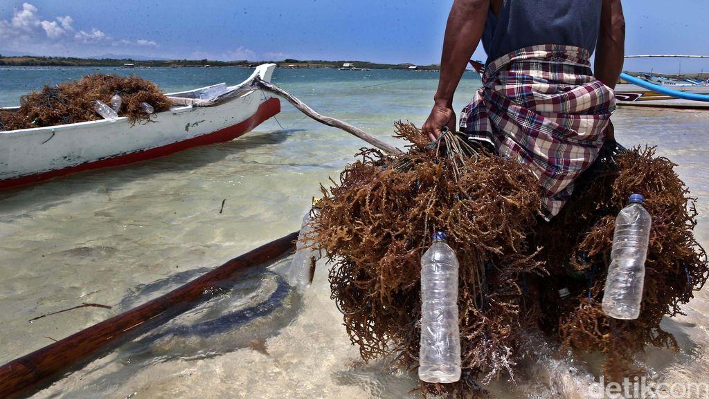 KKP Kumpul Bareng Pengusaha Bahas Bisnis Rumput Laut