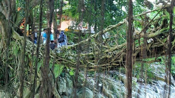 Menurut cerita, jembatan tersebut diketahui sudah berumur ratusan tahun. Kedua akar pohon beringin yang ada telah mengeras dan mengait menjadi satu jembatan alam yang bisa dilewati (Randy/detikTravel)