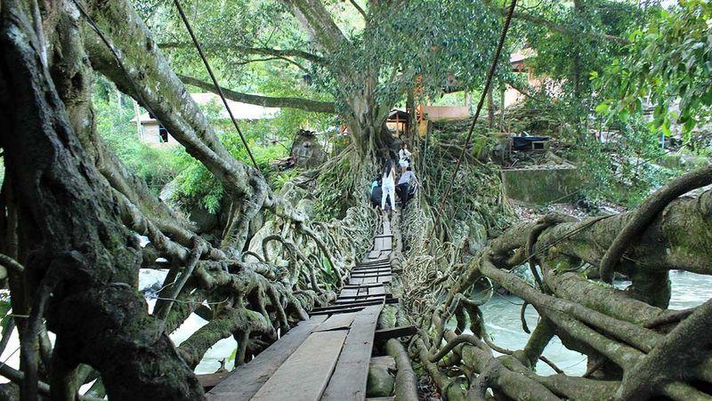 Jembatan akar merupakan objek wisata alam di Kecamatan Bayang Utara. Dari kota Painan, bisa ditempuh dengan perjalanan darat selama 30 menit (Randy/detikTravel)