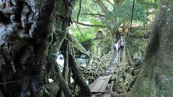 Traveler pun harus menuruni tangga terlebih dulu sebelum tiba di tepi Sungai Bayang yang merupakan lokasi jembatan akar. Tak berapa lama, tampak jembatan akar yang begitu megah (Randy/detikTravel)