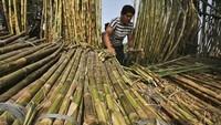 Polemik Pabrik Gula Lamongan Berlarut, Petani Surati Menperin