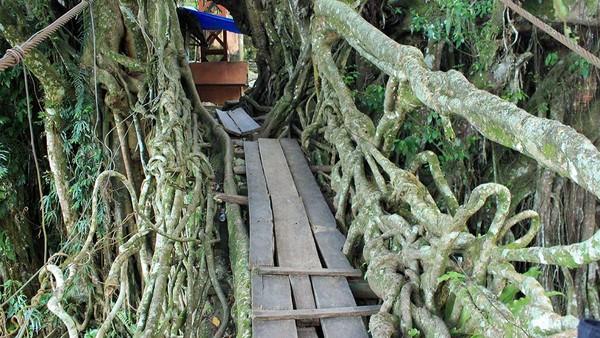 Demi keberlangsungan jembatan akar tersebut, pihak pemda setempat juga telah memperkuat jembatan dengan memasangkan tali besi. Di musim hujan, tali tersebut juga dipergunakan untuk mengangkat jembatan agar tidak terkena derasnya aliran Sungai Bayang (Randy/detikTravel)